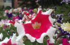 FLOWERS_nepal06