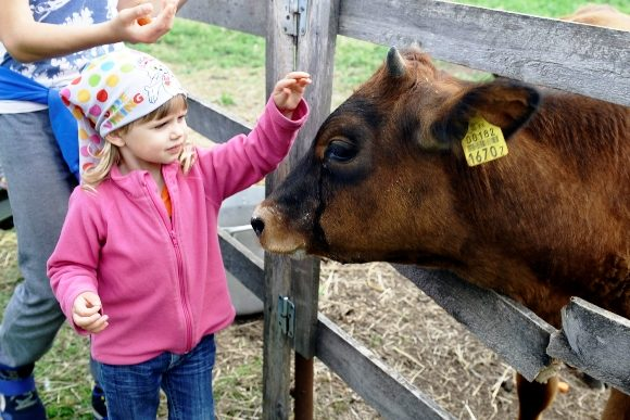 (160725) -- KONJU (ESTONIA), July 25, 2016 (Xinhua) -- A child interacts with a cow at Konju farm, northeastern Estonia, during the open farm day on July 24, 2016. Over 240 farms across Estonia participated in the event, where people get to know more about life on a farm. (Xinhua/Sergei Stepanov) (nxl)